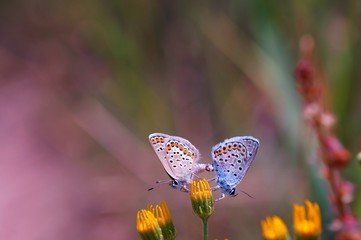 Beautiful pictures of butterflies in nature. Macrophotography of nature. Beautiful natural background.