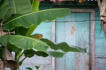 View of banana leaves against blue house door