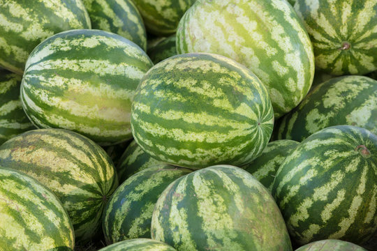 Background many large sized watermelons