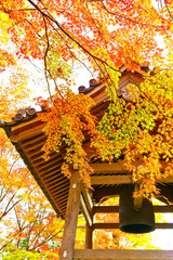 Fototapeten Honig View of the Japanese garden in autumn at Mount Arashi in Kyoto, Japan.