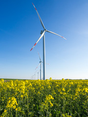 Wind turbines or windmills creating electricity out of wind energy on yellow rape or canola field, Nordfriesland, Germany.