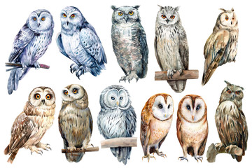 Tuinposter Uilen cartoon set of owls on an isolated white background, watercolor illustration
