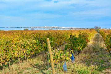 vignes et palavas à Villeneuve-lès-Maguelone