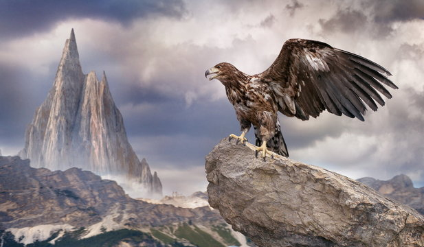 an eagle sits on a rock in the winter mountains