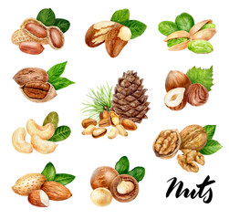 Nuts big set composition watercolor isolated on white background