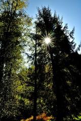 Sunburst in a meadow near Drift Creek Covered Bridge in the Coast Range of Oregon.