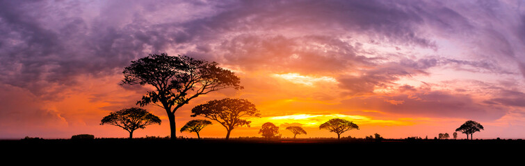 Fotobehang Afrika Panorama silhouette tree in africa with sunset.Tree silhouetted against a setting sun.Dark tree on open field dramatic sunrise.Typical african sunset with acacia trees in Masai Mara, Kenya