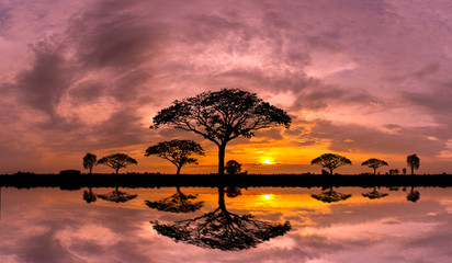 Fond de hotte en verre imprimé Afrique Panorama silhouette tree and Mountain with sunset.Tree silhouetted against a setting sun reflection on water.Typical african sunset with acacia trees in Masai Mara, Kenya.