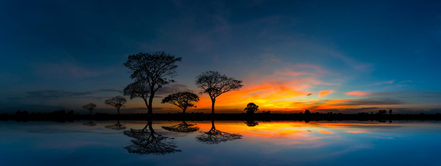 Panorama silhouette tree and Mountain with sunset.Tree silhouetted against a setting sun reflection on water.Typical african sunset with acacia trees in Masai Mara, Kenya. Fototapete
