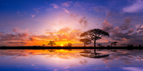 Panorama silhouette tree and Mountain with sunset.Tree silhouetted against a setting sun reflection on water.Typical african sunset with acacia trees in Masai Mara, Kenya. Wall mural