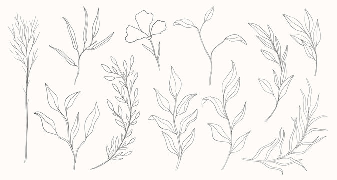 Plant nature hand drawn set. Collection botanical element.Elegante vintage style.