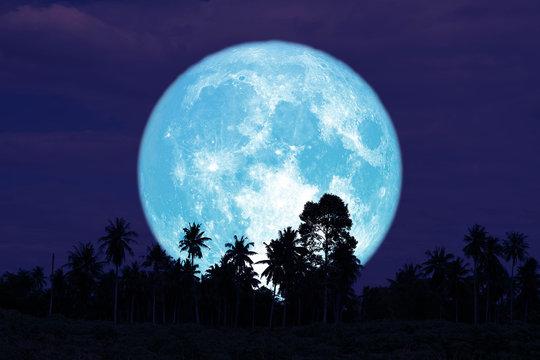 super full harvest moon on night sky back trees in the field