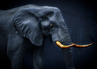 Deurstickers Olifant Ghostly fantasy image of an african elephant