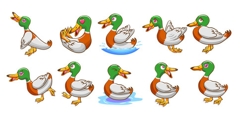 duck vector set clipart design
