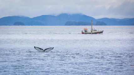 Hump Back Whale diving off in front of a small fishing boat, West Cost near Prince Rupert, Canada