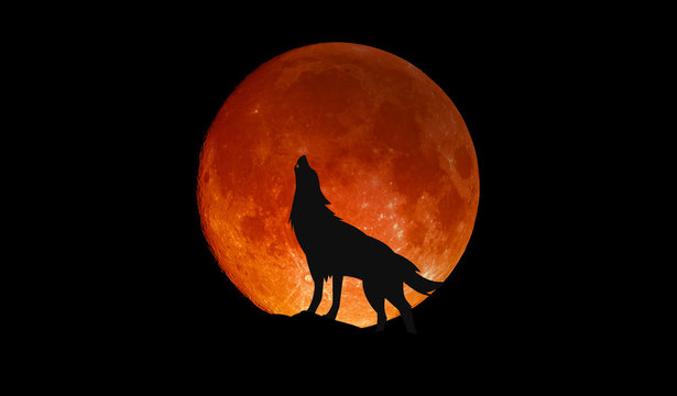 Wolf howling at the big full blood moon