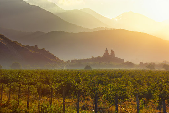 Scenic view of vineyards in the Kakheti region at sunrise against the background of the historic fortress of Gremi, country Georgia
