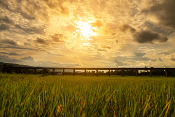 Bridge sunset evening with the beautiful green rice fields. Fotoväggar