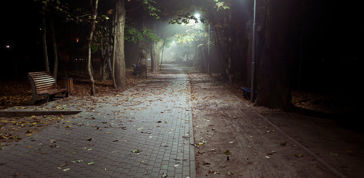 The foggy evening in the autumn park