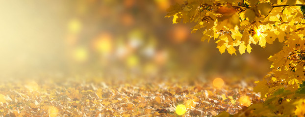 Decorative autumn banner decorated with branches with fall golden yellow maple leaves on background of orange autumnal foliage and shiny glowing bokeh, place for your text, indian summer in park