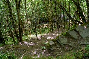 Papiers peints Rivière de la forêt a downhill path in the middle of the forest.