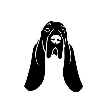 Basset hound dog - isolated vector illustration