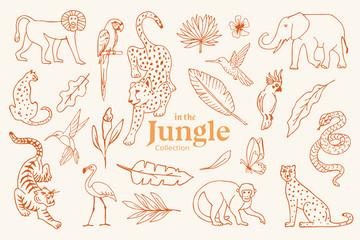 Set of hand drawn illustrations of jungle animals & plants
