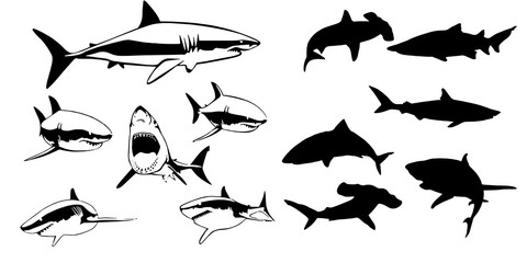 set different shark silhouettes for you design on white background