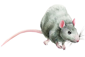 watercolor gray rat on an isolated white background