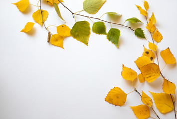 Autumn leaves of birch on white background