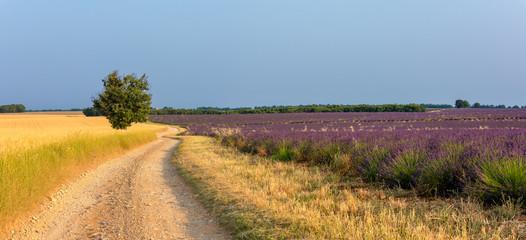 Fototapeta Lavender 40 obraz