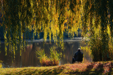 Autumn landscape, a fisherman sits by a pond under a yellow willow tree