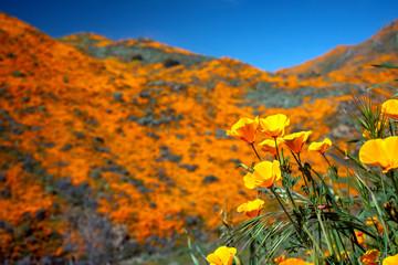 Wildflower Super Bloom