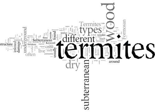Different Types of Termites