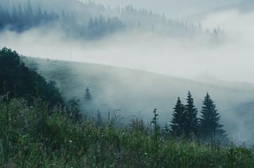 Wall Mural - Foggy morning landscape