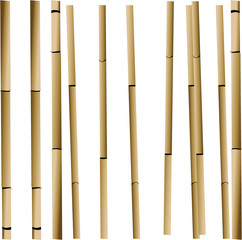 Bamboo Stalks Pattern Illustration