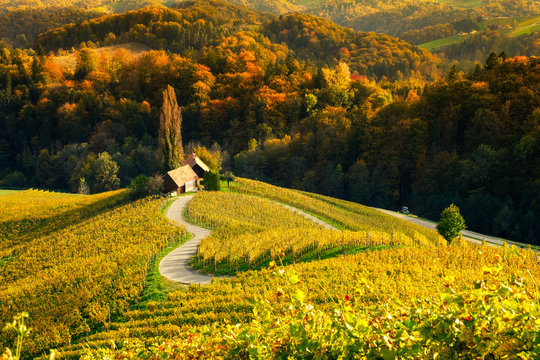 Vineyards with a autumn  in Spicnik, Slovenia