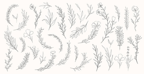 Plant nature hand drawn set. Collection botanical element.Elegante vintage style.