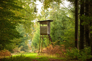 Herbstwald im Münsterland
