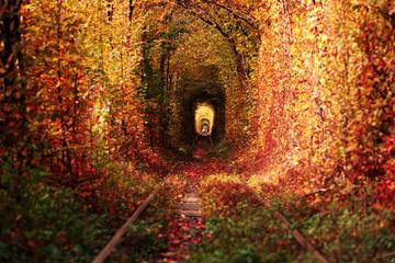 Foto auf Leinwand Braun a railway in the autumn forest tunnel of love