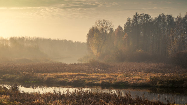 Autumn morning foggy landscape. sad view of an overgrown narrow stream in a marshy area with a coastal lush dry reed and light forest in twilight haze in overcast weather