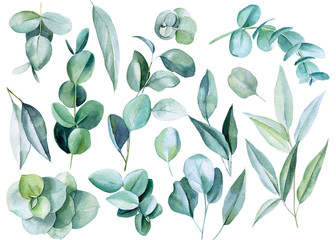 set of eucalyptus leaves on a white background, watercolor illustration Wall mural