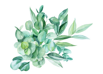 bouquet of branches eucalyptus, leaves on a white background, watercolor illustration Wall mural