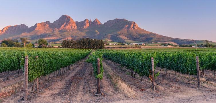 Sunset over vineyards