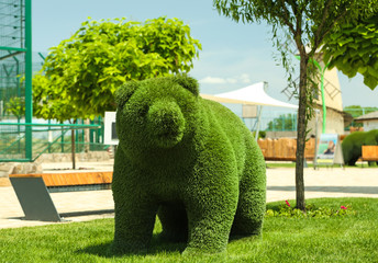 Beautiful bear shaped topiary at zoo on sunny day. Landscape gardening