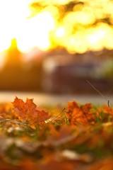 Aluminium Prints Autumn Buntes Laub im Herbst, goldene Blätter am Abend bei Sonnenschein im Gegenlich