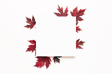 Autumn composition. Red burgundy maple leaves and blank white sheet of paper on white background. Flat lay, top view, copy space. Fall concept. Autumn background. Creative season layout
