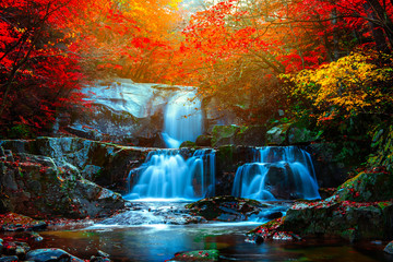 Poster Forest river Autumn leaves and waterfalls at Baekryeong South Korea National Park