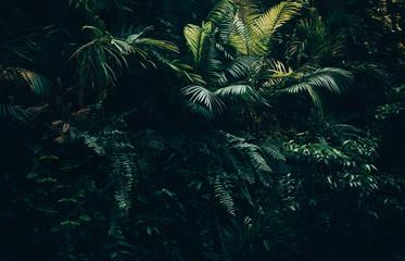 Tropical leaves background,jungle leaf garden