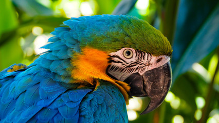 Macaw- South American Parrot Fotomurales